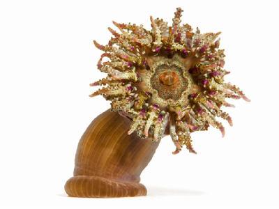 精彩绝伦的海洋无脊椎动物:海蛞蝓触手可脱落-中国